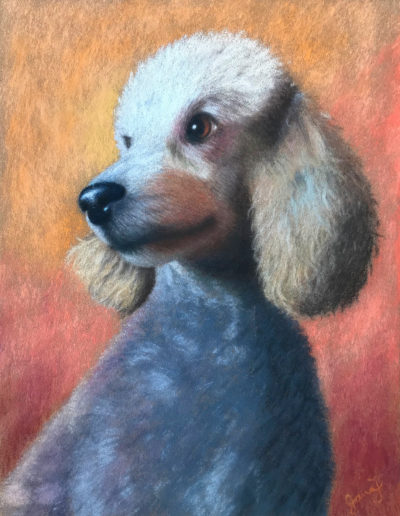 Pastel painting of silver poodle with orange background