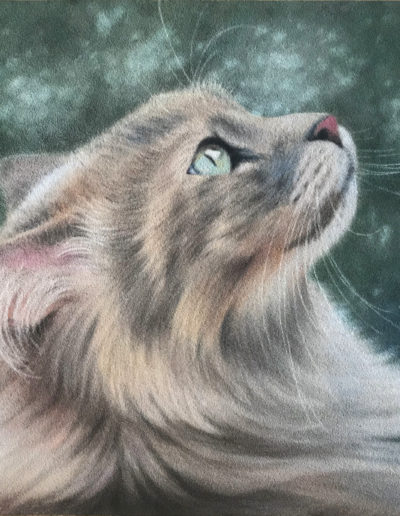 Pastel painting of long-haired cat in profile