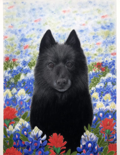 Pastel painting of black dog in field of flowers