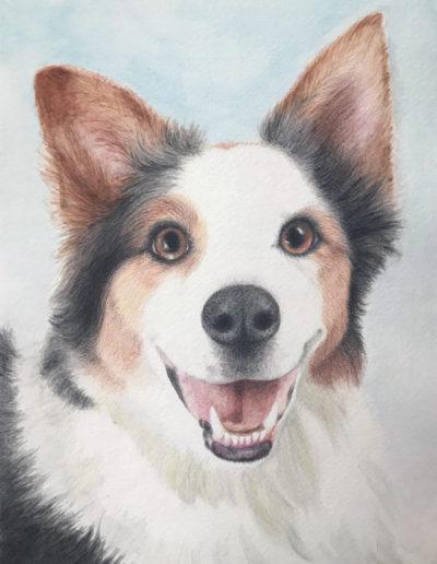 Painting of smiling Australian Shepherd dog