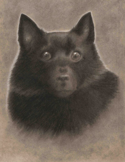 Charcoal drawing of black dog