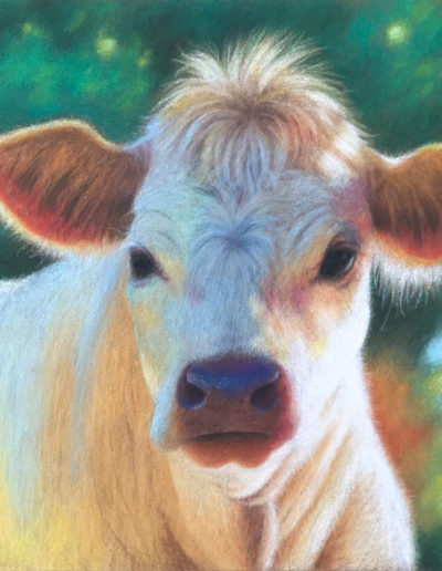 Pastel painting of a cow in the sunlight