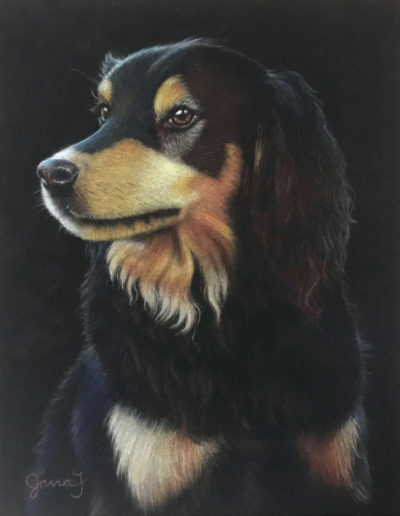 Pastel painting of Hovawart dog with black background