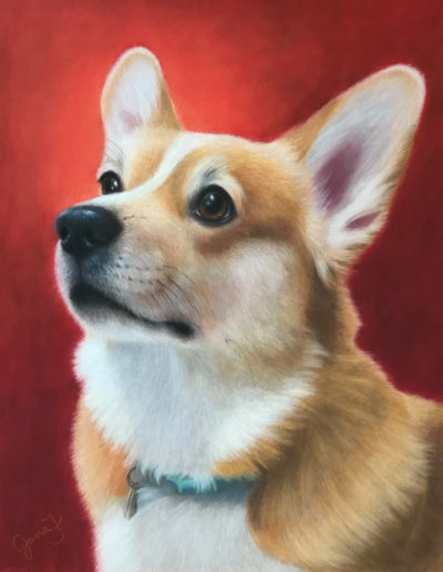 Pastel painting of corgi dog looking up with red background
