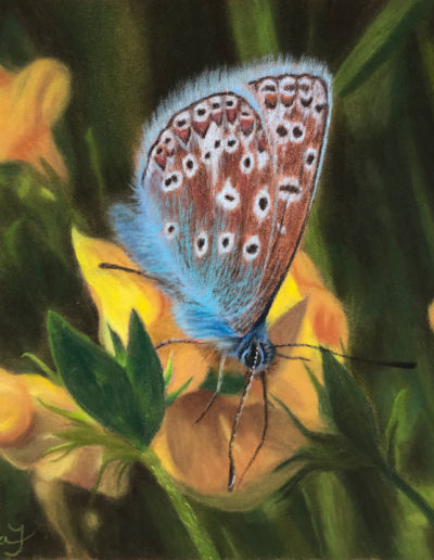 Painting of blue butterfly on yellow flowers