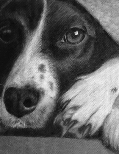Black and white drawing of a dog peeking out from under a blanket